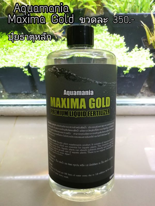 aquamania maxima gold
